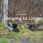 Longing to Linger